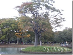 Pic_20131027_025